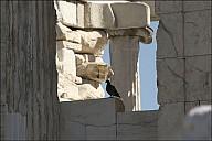 Acropolis_25_IMG_9135.jpg