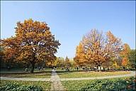2011-10_08Fall_04_IMG_6644.jpg