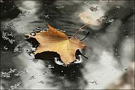 2011-10_08Fall_28_IMG_6876.jpg
