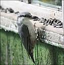 2012-09-01_Birds_02_IMG_8516.jpg