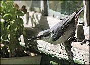 2012-09-01_Birds_04_IMG_8543.jpg