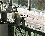 2012-09-01_Birds_05_IMG_8493.jpg