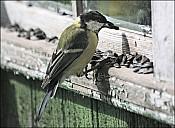 2012-09-01_Birds_06_IMG_8511.jpg