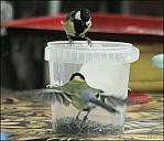 2012-09-01_Birds_07_IMG_8667.jpg
