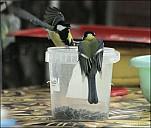 2012-09-01_Birds_08_IMG_8668.jpg