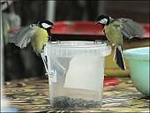 2012-09-01_Birds_09_IMG_8669.jpg