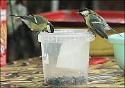 2012-09-01_Birds_11_IMG_8725.jpg