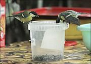 2012-09-01_Birds_12_IMG_8726.jpg