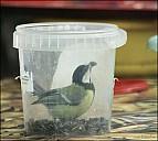 2012-09-01_Birds_13_IMG_8768.jpg
