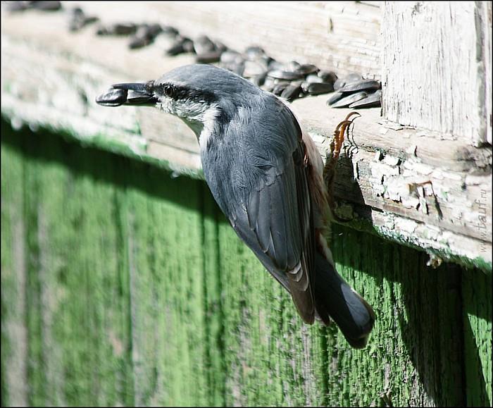 2012-09-01_Birds_03_IMG_8568-abc.jpg: 871x720, 174k (2012-09-11, 20:31)