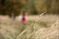 2012-09-30_DachaClose_51_IMG_9913.jpg