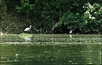 56a-River-_MG_5322.jpg