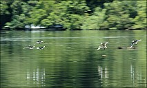 70-River-_MG_5414.jpg