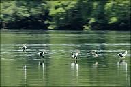 71-River-_MG_5422.jpg