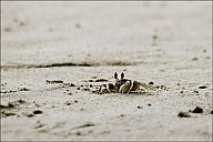02-crab-05-4897.jpg