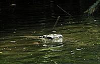 03-crocodile-01-5143.jpg