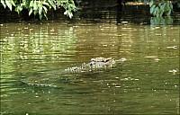 03-crocodile-08-5211.jpg