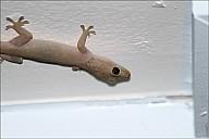 05-gecko-03--4956.jpg