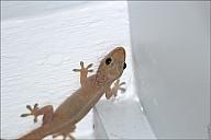 05-gecko-04--4981.jpg