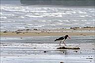 06-bird-01--3254-abc.jpg