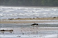 06-bird-02--3265.jpg