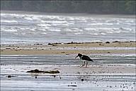 06-bird-03--3261.jpg