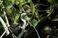 07-bird4-05-5622.jpg