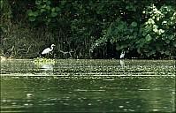 08-bird2-01-5322.jpg