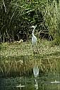 08-bird2-04-5114.jpg