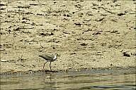 09-bird3-01-5315.jpg