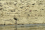 09-bird3-03-5306.jpg