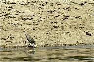 09-bird3-04-5313.jpg