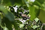 12-bird1-03--3912.jpg