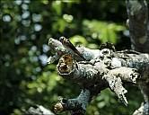 12-bird1-04--5253.jpg
