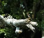 12-bird1-05--5263.jpg