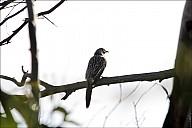 13-parrot0-00--2347.jpg