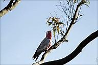 13-parrot0-01--2308.jpg