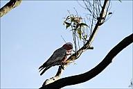 13-parrot0-02--2311.jpg