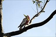 13-parrot0-03--2320.jpg