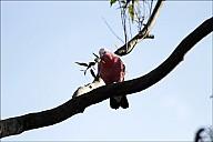 13-parrot0-04--2323-abc.jpg: 800x534, 100k (2013-02-10, 12:00)