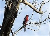 13-parrot0-05--2334.jpg