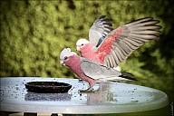 15-parrot1-01--2266.jpg