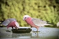 15-parrot1-02--2279-abc.jpg: 800x534, 149k (2013-02-10, 12:00)