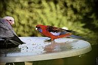 15-parrot1-03--2295.jpg
