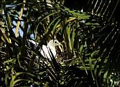 16-nest-01--5065.jpg