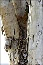 16-nest-02--5071.jpg
