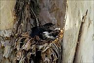16-nest-03--5069.jpg