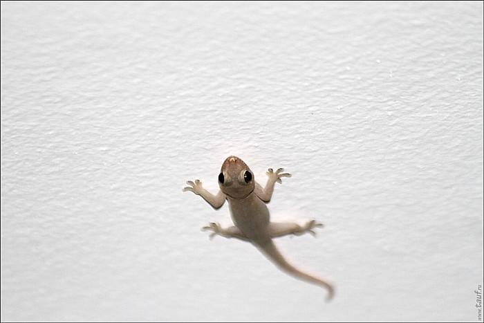 05-gecko-01--4944-abc.jpg: 800x534, 109k (2013-02-10, 11:59)