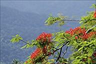 2012-11-xx-Australia-Flora-03_MG_5072-abc.jpg: 1600x1067, 558k (2016-12-10, 23:13)