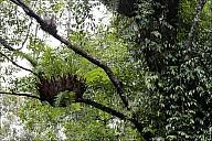2012-11-xx-Australia-Flora-1214-RainForest-_MG_4023.jpg